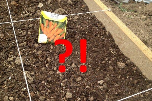 Морковь не взошла: причины и как ускорить прорастание?