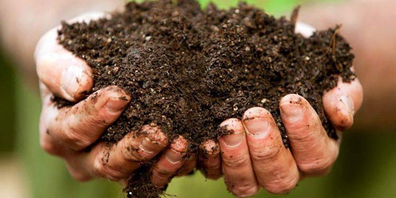 Натуральное удобрение для отменного урожая любых культур