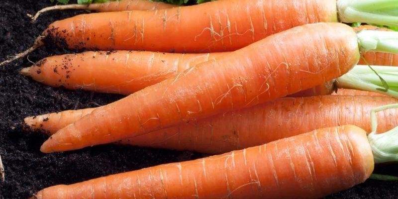 Не просто урожайные сорта моркови, а супер урожайные