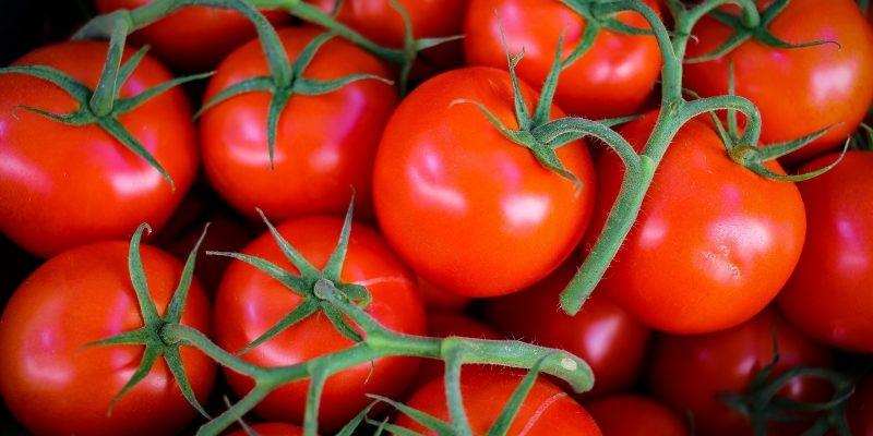 Не торопитесь сеять помидоры