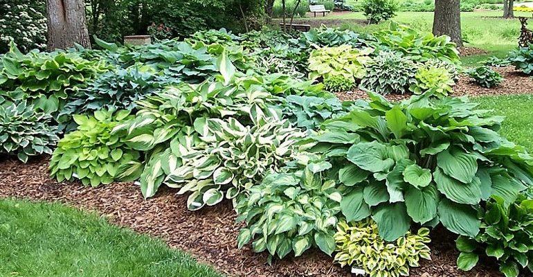 Неприхотливые, тенелюбивые, многолетние растения для сада – названия и фото