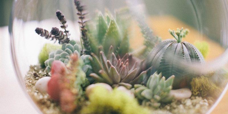 Новый популярный декор Растительные террариумы и флорариумы