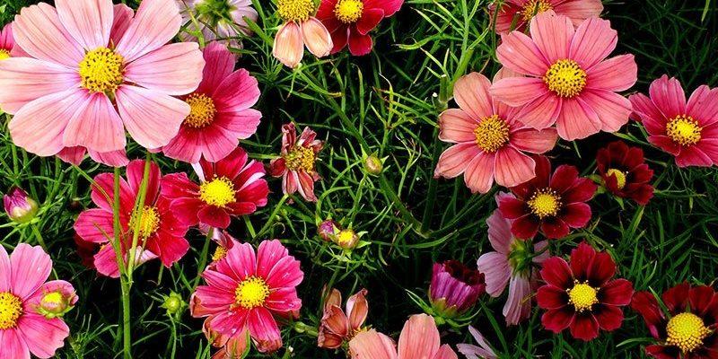 Определяем название садового цветка по фото: каталог с фото и названиями