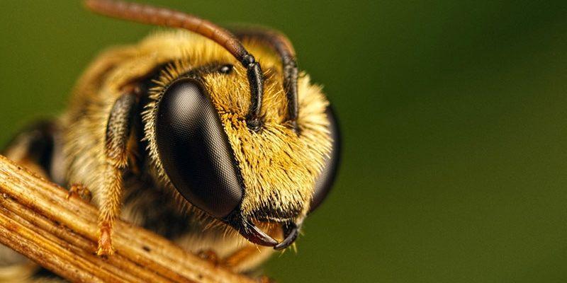 Пчелиный подмор: лечебные свойства и способы применения