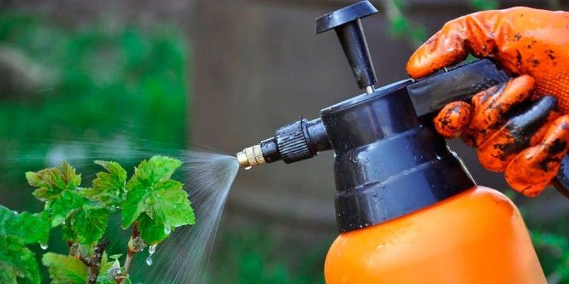 Полезное средство для огорода и сада, которое оживит даже самое безнадежное растение