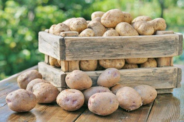 Правила хранения урожая картофеля