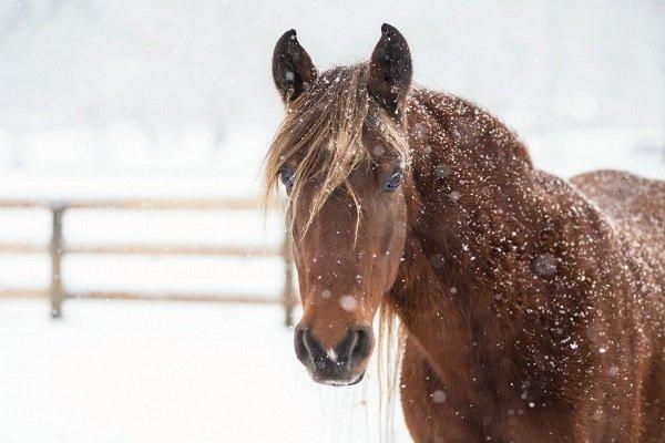 Признаки замерзания лошади и порядок действий, чтобы её согреть