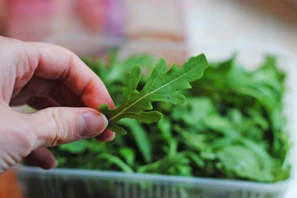 Руккола: посадка, уход и выращивание растения из семян