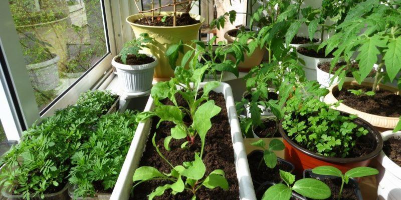 Семена на рассаду: когда сажать, сроки посева и уход