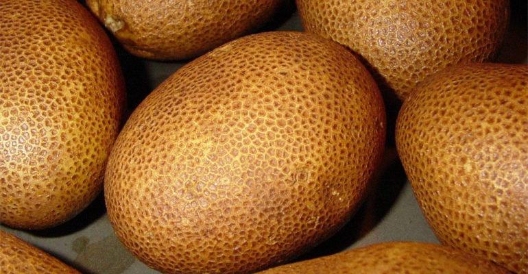 Сорт картофеля Киви – описание и характеристики, фото, отзывы
