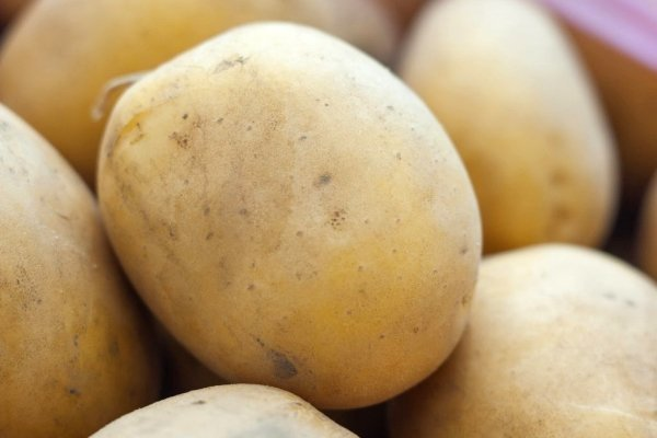Сорт картофеля Метеор: описание и особенности выращивания