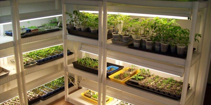 Стеллажи для выращивания рассады с подсветкой своими руками