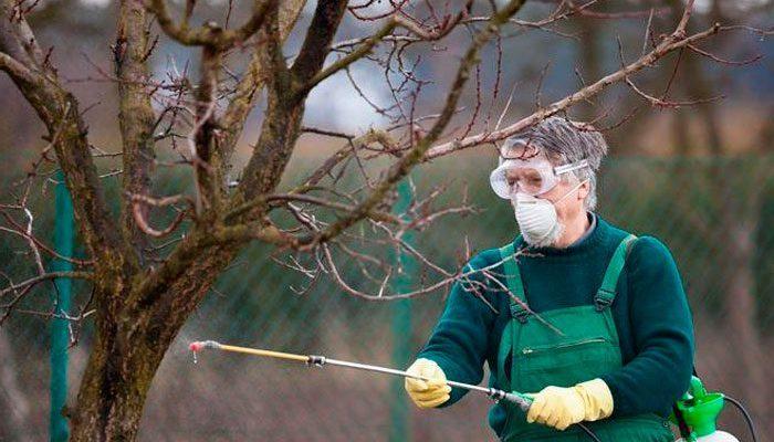 Весеннее опрыскивание сада от вредителей и болезней