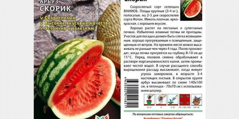 Всё об арбузе Скорик – особенности посадки и выращивания