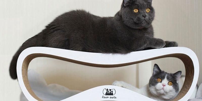 Заботимся о питомце: домик для кота в частном доме и на дачном участке: выбираем самый лучший домик.