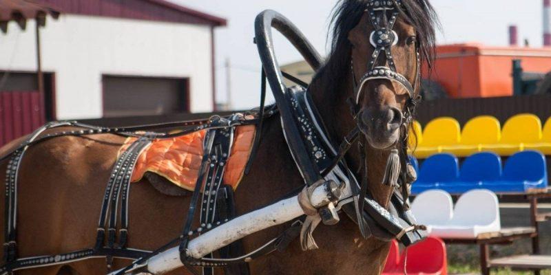 Запрягание лошади ‒ правила и пошаговая инструкция